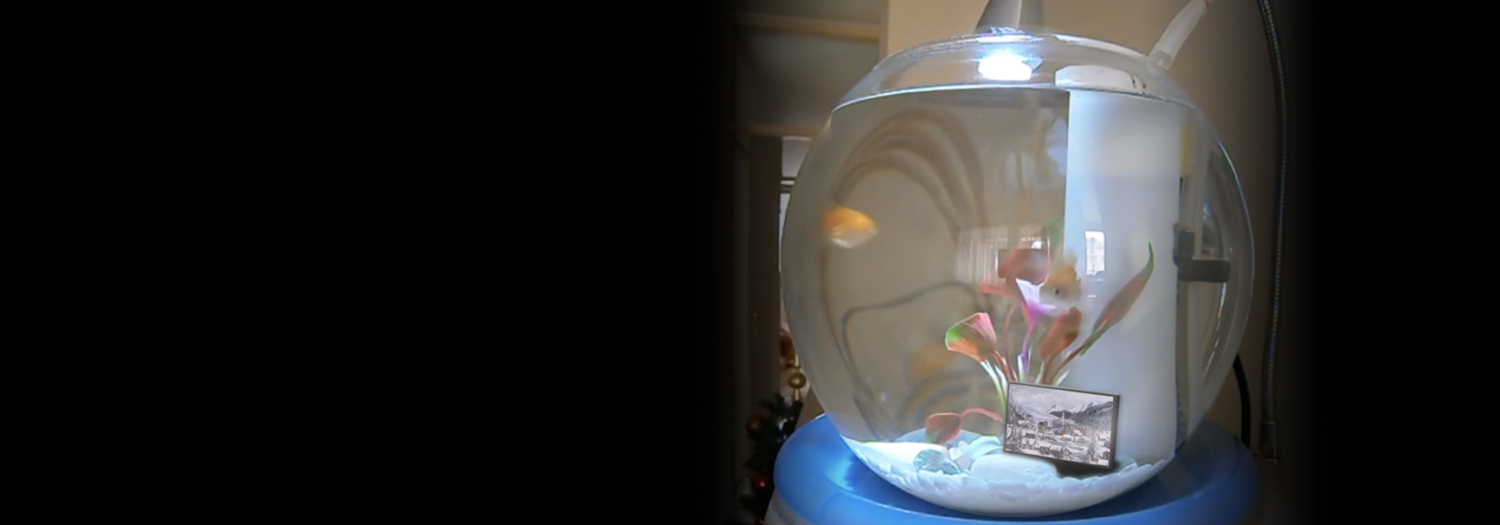 Untitled (The Haunted Fish Tank) by Michelle Lisa Herman